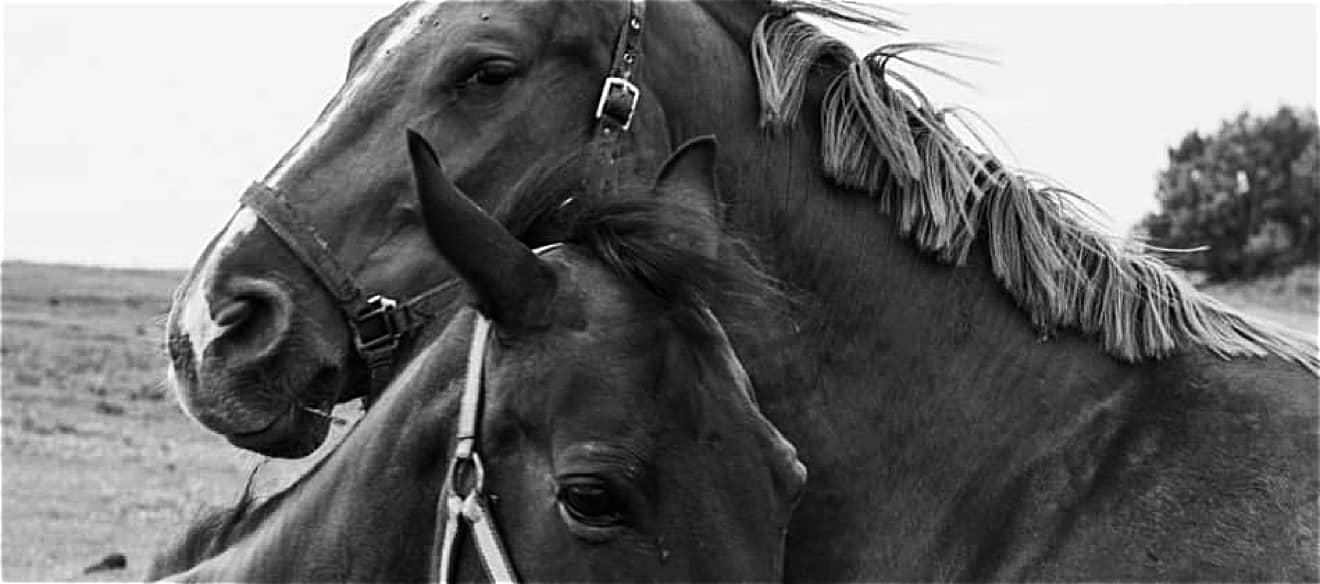 staj kincl, koně, vyjíždky