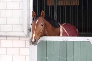 výcvik koní